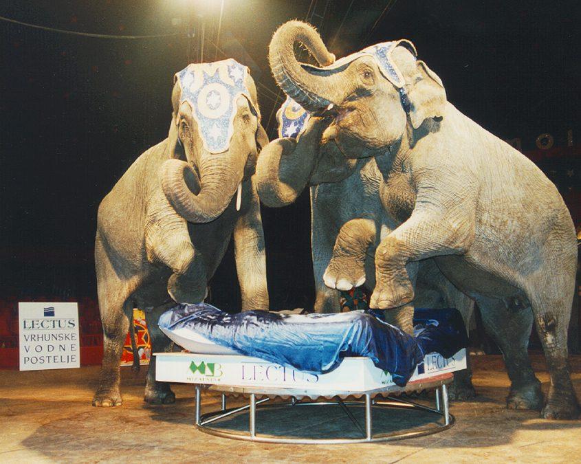 Trije sloni na vodni postelji